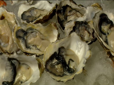 Pan right across display of open oysters on ice