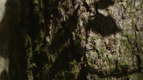 pan right across leaf shadows moving on the bark of a tree trunk in a forest, new south wales, australia. - baumstumpf stock-videos und b-roll-filmmaterial