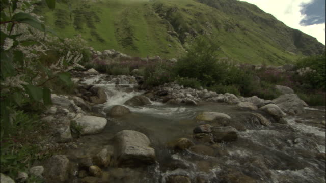 pan right across mountain stream, valley of flowers, himalayas available in hd. - valley stock videos & royalty-free footage