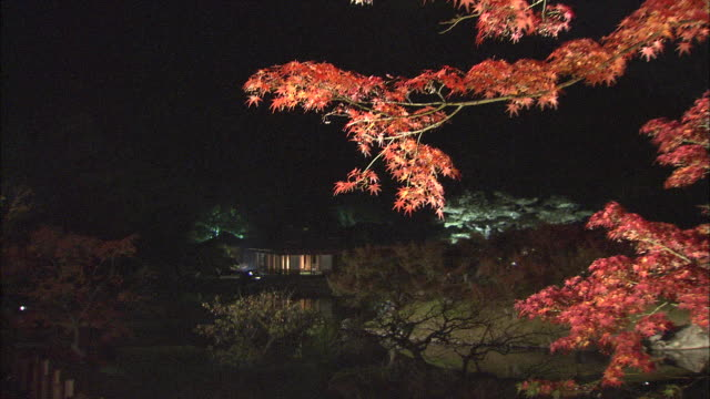 Pan right across overhanging branches of illuminated maple tree in Ritsurin Park