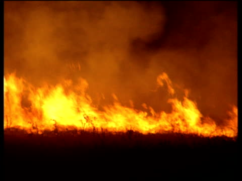 Pan right across roaring flames of low level bush fire