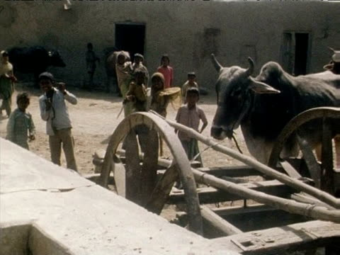 pan right across 'untouchables' with oxen and cart in foreground northern india mar 77 - dalit stock videos and b-roll footage