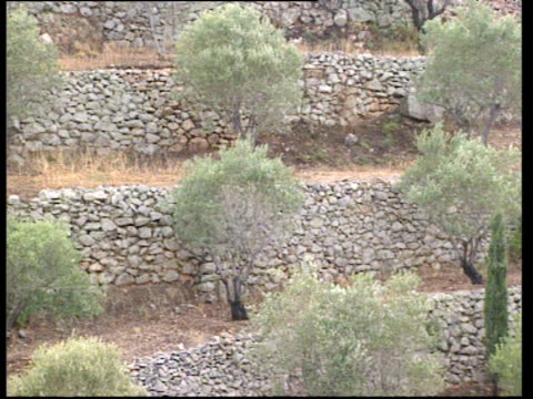 pan right along stone terraces of small olive trees patmos greece - greece stock videos & royalty-free footage
