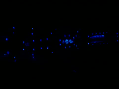 Pan right and left over lights on underside of lanternfish, Gulf of Mexico