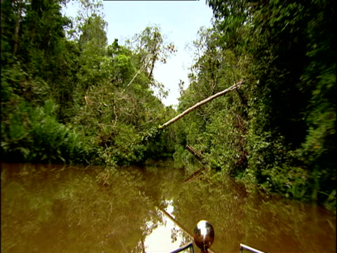 Pan right as boat travels along tree lined river in rainforest Borneo