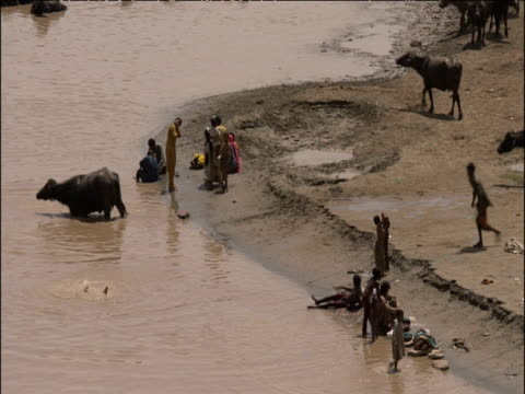 pan right as boys run into indus river to bathe alongside water buffalo - sindh pakistan stock videos and b-roll footage