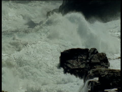 "vidéos et rushes de pan right as breaking wave crashes onto rocks, falkland islands - ""bbc natural history"""