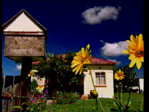 pan right from birdhouse to sunflowers in picturesque garden of small cottage under beautiful blue sky, western cape, niznah - cottage stock videos & royalty-free footage