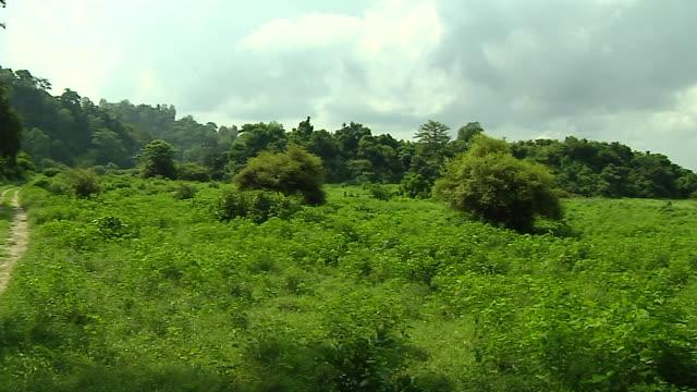 vidéos et rushes de pan right jim corbett park nainital uttarakhand india - panoramique
