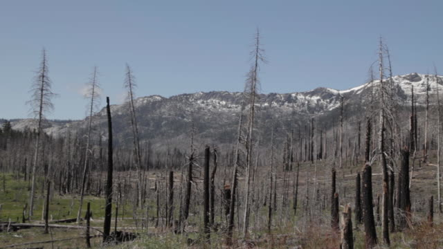 Pan Right of an area ravaged by a forest fire in Lake Tahoe
