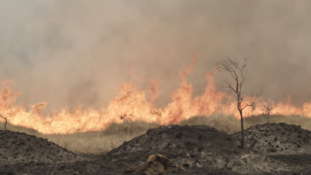 pan right over burning cerrado grassland. - forest fire stock videos & royalty-free footage
