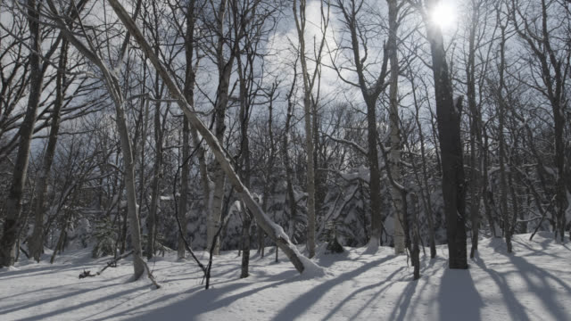 pan right over copse of trees in snow. - bare tree stock videos & royalty-free footage