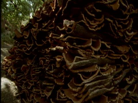 pan right over cork bark harvest - 木肌点の映像素材/bロール