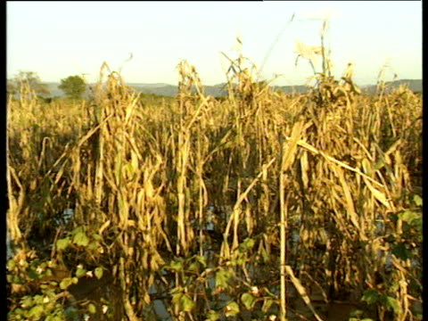 vídeos de stock e filmes b-roll de pan right over dead crops in field jan 00 - corno de áfrica