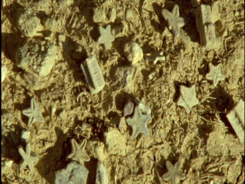 Pan right over fossilized sea animals on ground