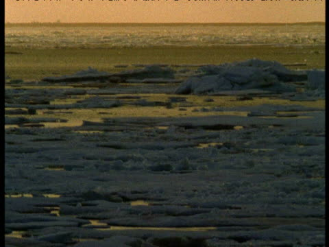 "vidéos et rushes de pan right over ice at sunset, somerset island, canada - ""bbc natural history"""