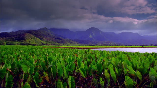 pan right over leaves blowing in wind in green fields with mountains in background, hawaii available in hd. - pacific islands stock videos & royalty-free footage