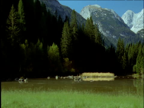pan right over meadow lake and dolomite mountains italy - ムラがある点の映像素材/bロール
