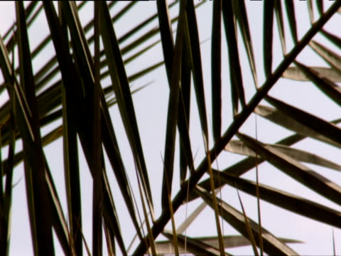 pan right over palm fronds - blattfiedern stock-videos und b-roll-filmmaterial
