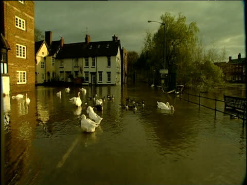 pan right over river flooded over embankment area swans ducks and park bench in foreground bewdley nov 00 - aquatisches lebewesen stock-videos und b-roll-filmmaterial