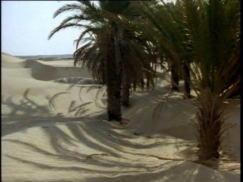 pan right over sand dunes to palm trees and oasis in desert, tunisia - desert oasis stock videos & royalty-free footage