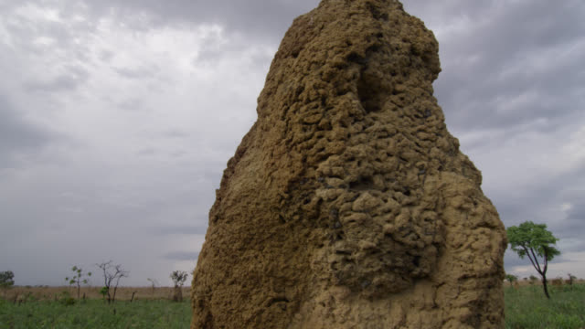 Pan right over termite mounds in grassland.