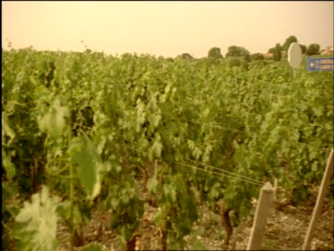 WA pan right over vineyard, Chateau Lafite Rothschild, Bordeaux, France