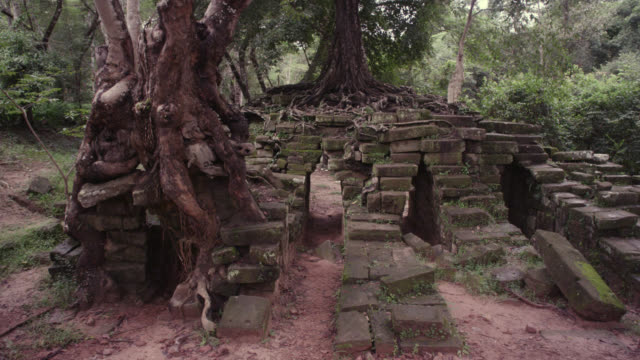 Pan right past trees growing out of ruins, Angkor.