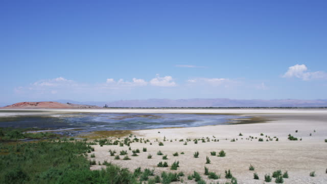 Pan right, plants grow near lake in desert