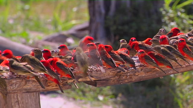 Pan Right Shot Birds Praslin Victoria Mahe Seychelles