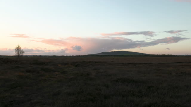 pan right shot of a bog at sunset - bog stock videos & royalty-free footage