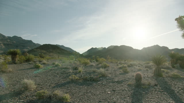 pan right shot of a desert landscape with a joshua tree - 熱帯の低木点の映像素材/bロール