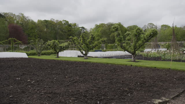 pan right shot of freshly turned soil and fruit trees in the walled garden at floors castle - botany stock videos & royalty-free footage