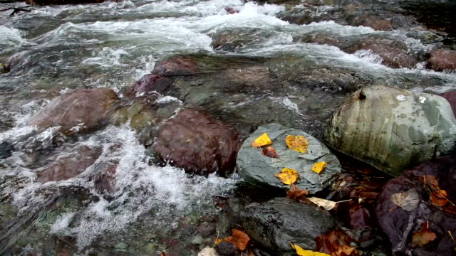 pan right shot of golden leaves swirling in water and leaves on rocks in river. - mcdonald creek stock-videos und b-roll-filmmaterial
