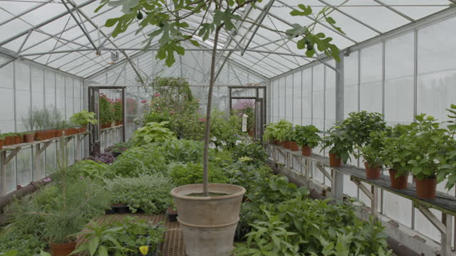 pan right shot of plants inside a greenhouse - pottery stock videos & royalty-free footage