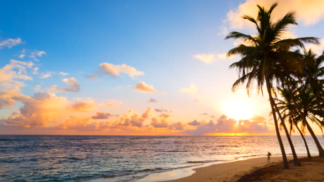 ws pan right, sunset over tropical beach and palm trees - dominican republic stock videos and b-roll footage
