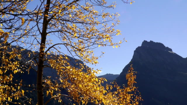 pan right telephoto shot of jagged mountain peaks with yellow leafed trees blowing in the wind in foreground. - glacier national park us stock videos and b-roll footage