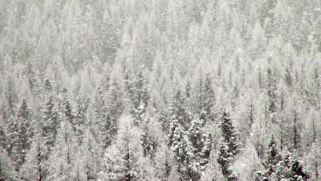 pan right telephoto shot of snow covered trees in mountains during heavy puffy snowflake snow storm. - glacier national park us stock videos and b-roll footage