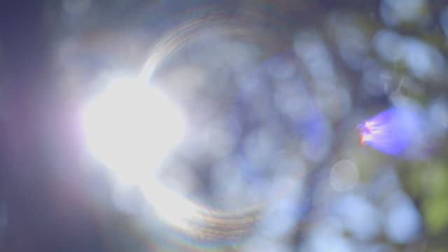 Pan right, then left, over the sun shining through a defocussed forest tree canopy, creating extreme lens flare, New South Wales, Australia.