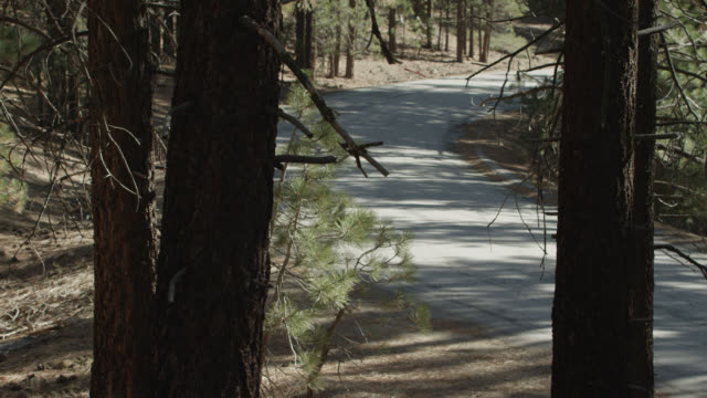 stockvideo's en b-roll-footage met pan right to left of car driving through forest. pine trees. could be town car. - naaldbos