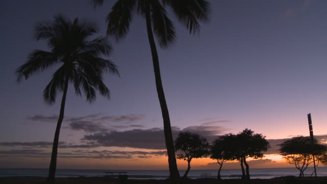 Pan Right to Left: Silhouette of Trees of Haleiwa
