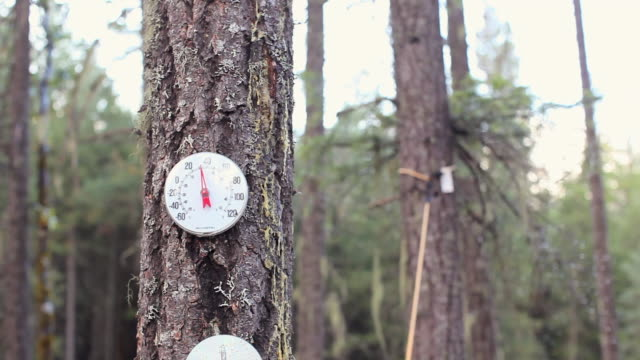 pan right to left: thermometer attached on a tree - thermometer stock videos & royalty-free footage