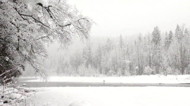 pan right wide shot of snow covered trees along river bank in mountains during heavy puffy snowflake snow storm. - glacier national park us stock videos and b-roll footage