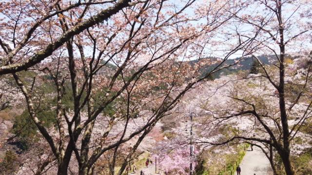 pan right, yoshino cherry blossoms - satoyama scenery stock videos & royalty-free footage