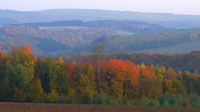 pan shot, fall trees and ploughed field in uprising landscape