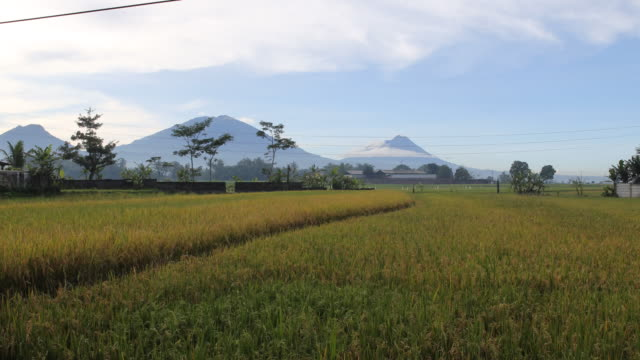 pan shot of a beautiful landscape with a rice field in the foreground and two volcanoes in the background on java near yogyarkarta in indonesia - indonesia islands stock videos & royalty-free footage