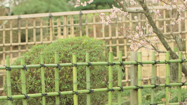 Pan shot of an old bleached bamboo fence and newly made vibrant green bamboo fence built parallel to each other in Ibaraki Kairakuen Garden Plum...