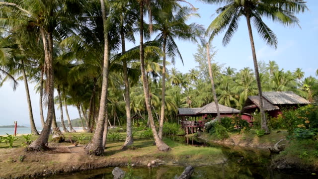 pan shot of beach huts under palmtrees - gulf of thailand stock videos & royalty-free footage