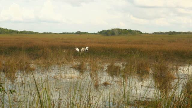 Pan shot of Birds in south Florida Swamp