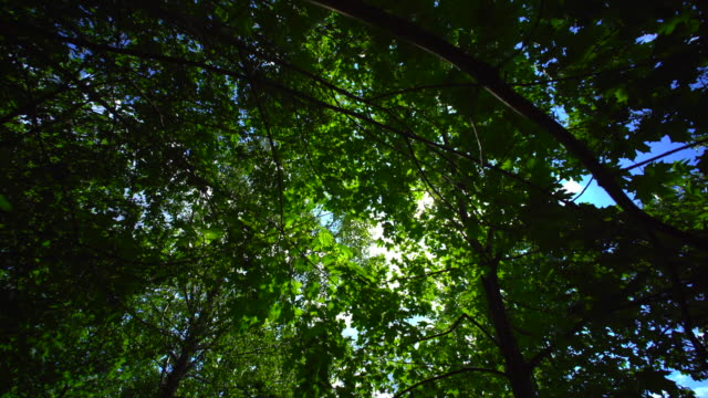 a pan shot of forest with the sun passing through the trees - dolly shot stock videos & royalty-free footage